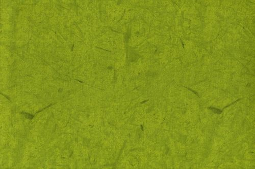 Windham Fabrics Forest 42263-1